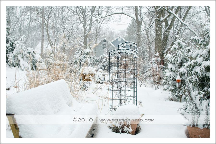 Studio Sinead Ann Arbor Photographer